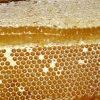 nhận biết mật ong hoa nhãn