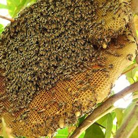 mat-ong-rung